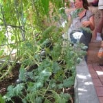 Greenhouse greywater system