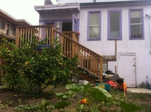 Backyard garden and house