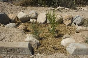 Planted Basin2